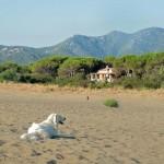 Vacanze Sardegna  Colostrai (26)